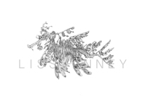 leafy sea dragon watermarked